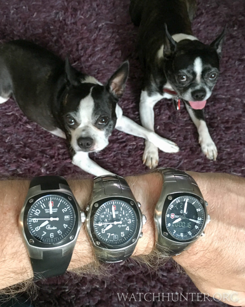 Meet my own hunters... the K9 Squirrel Brigade seen here with the Swiss Army Hunter watches - generations 1, 2 and 3.