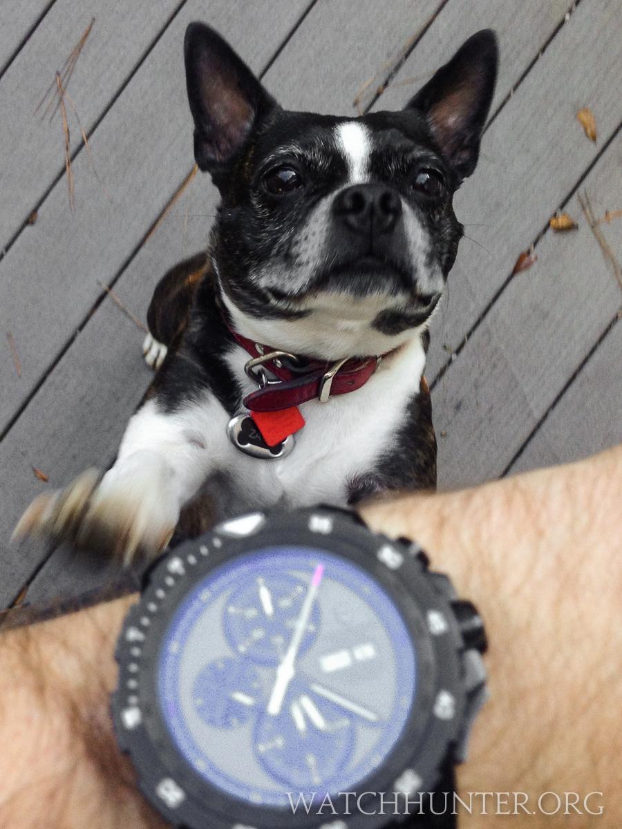 The Victorinox Swiss Army Alpnach Chronograph is Zack's favorite dog walking watch